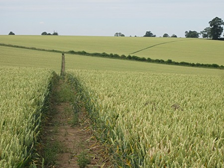 Excellent cross field reinstatement on the footpath to Chilcote