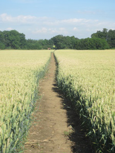 Excellent cross field path compliance in Leicestershire