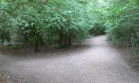 Path through Burbage Wood