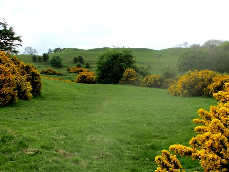 Burrough Hill flanked by gorse in flower - the smell was delightful.