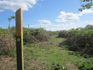 Footpath cleared by Wildspace team. Looking towards the bypass.
